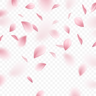 Ilustração realista de pétalas de rosa sakura caindo