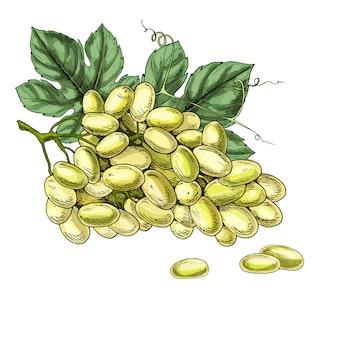 Ilustração realista de uvas