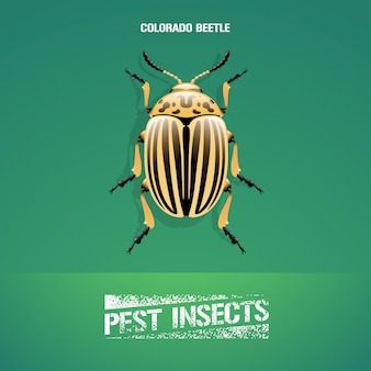 Ilustração realista do inseto leptinotarsa decemlineata (besouro do colorado)