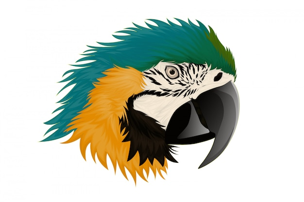 Ilustração realista papagaios arara