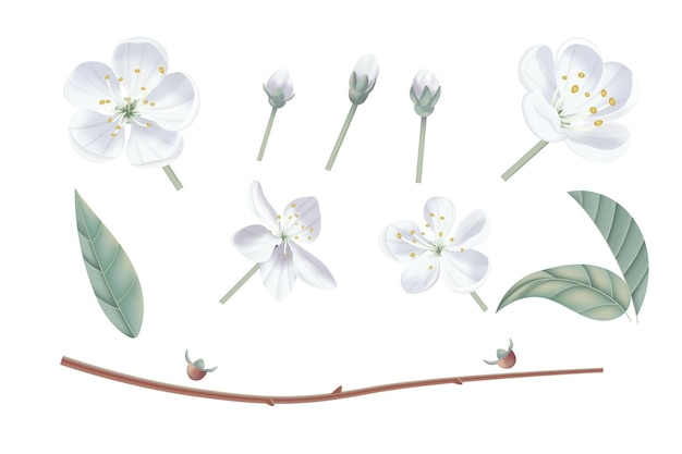 Ilustração realista vintage flor de cerejeira. estilo aquarela pastel floral.