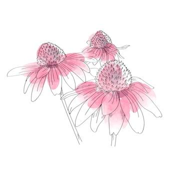 Ilustração roxa do coneflower no fundo branco