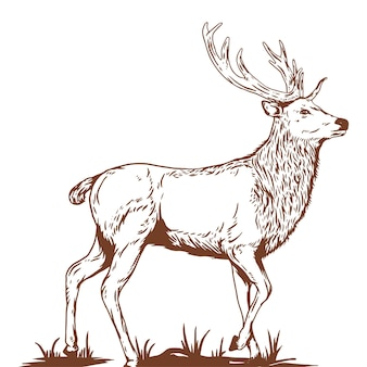 Ilustração tirada vintage deer han