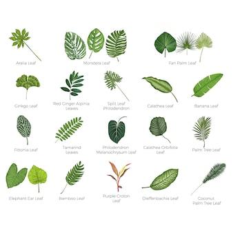 Ilustração vetorial botânica de folhas tropicais