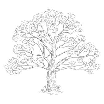 Ilustração vetorial com árvore de esboço, arte de linha preto e branco.