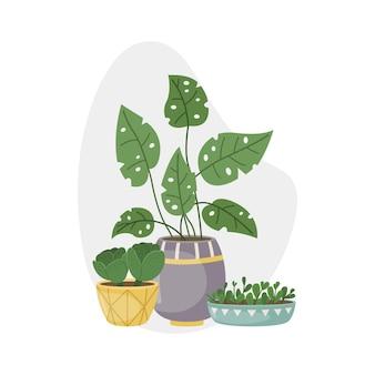 Ilustração vetorial com plantas caseiras em vasos. plantas decorativas no interior da casa. estilo simples.