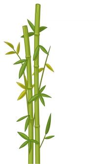 Ilustração vetorial de bambu