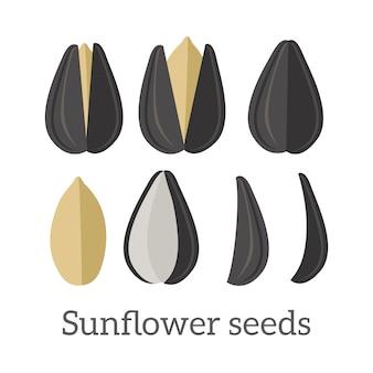 Ilustração vetorial de sementes de girassol em design plano