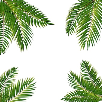 Ilustração vetorial eps10 do fundo da silhueta da folha da palmeira bonita