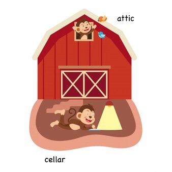 Ilustração vetorial oposta ao sótão e adega