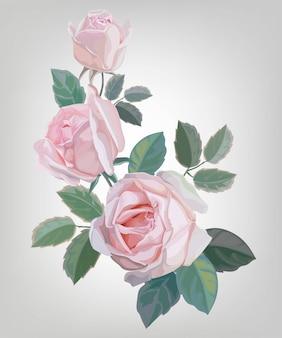 Ilustração vetorial rosa rosa