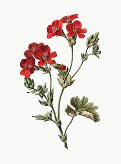Ilustração vintage de flor vermelha