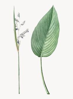 Ilustração vintage de jacaré-bandeira em pó