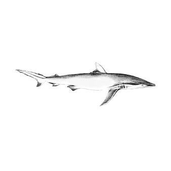 Ilustração vintage de tubarão