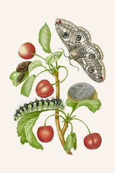 Ilustração vintage do ciclo de vida da borboleta pavão