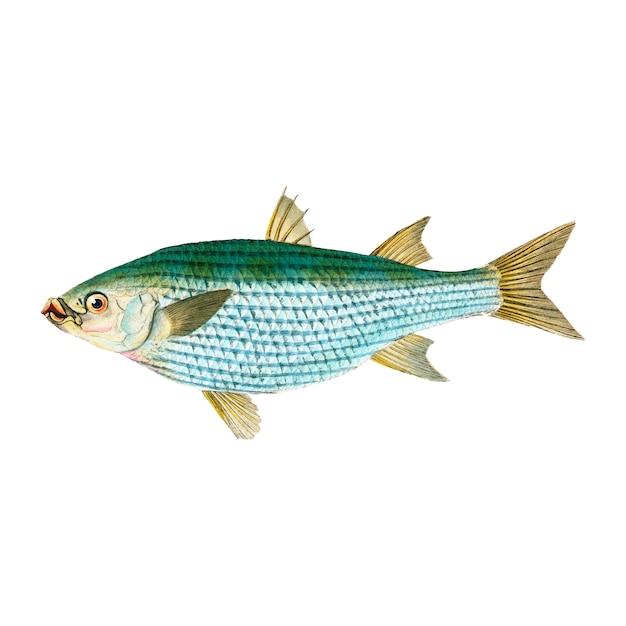 Ilustração vintage fish