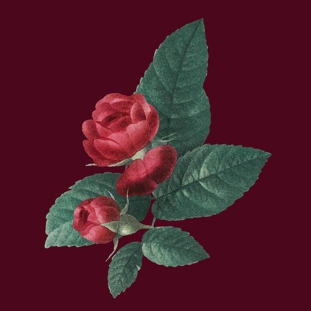 Ilustração vintage vermelha de buquê de rosa francesa desenhada à mão