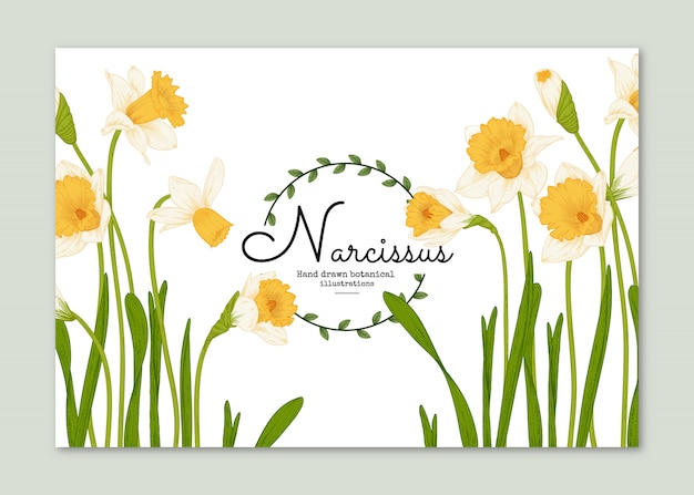 Ilustrações botânicas com flores amarelas