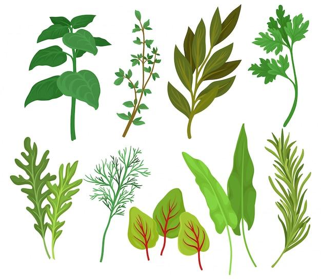 Ilustrações coloridas em estilo simples, isolado no fundo branco.