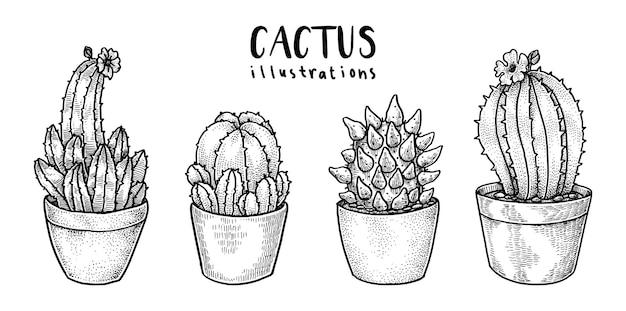 Ilustrações de cacto, desenhadas à mão