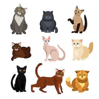 Ilustrações de conjunto de diferentes raças de gato, animais de estimação fofos, adorável gatinho em fundo branco em grande estilo.
