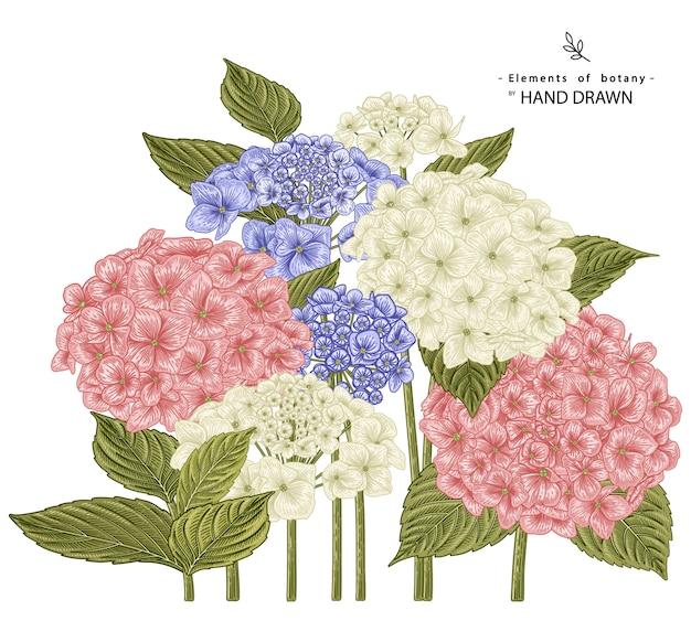 Ilustrações de desenhos de flores de hortênsias