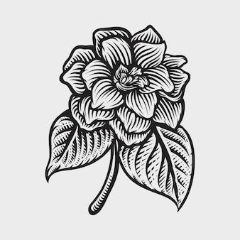 Ilustrações de estilo de gravura de mão desenhada de jasmim