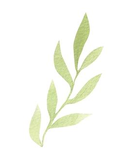 Ilustrações de plantas em aquarela para convites de casamento e design gráfico