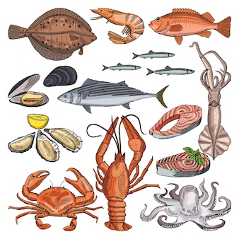 Ilustrações de produtos de alimento de mar para o menu gourmet. imagens de vetor de lula, ostra e diferente