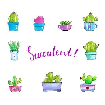 Ilustrações de suculentas bonitos