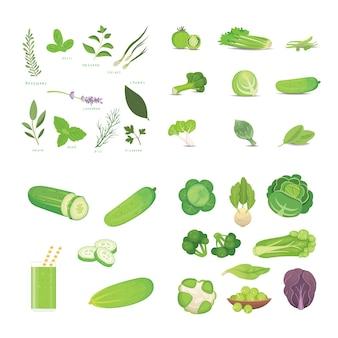 Ilustrações de vegetais e ervas verdes