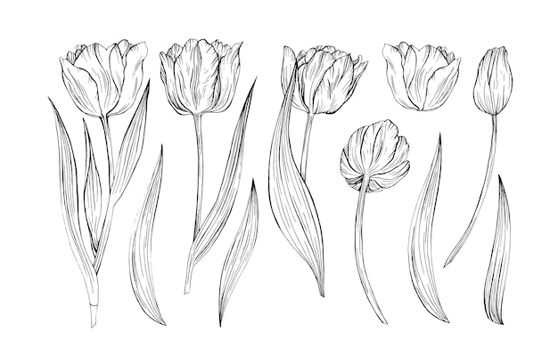 Ilustrações desenhadas à mão em tulipa linha arte flores