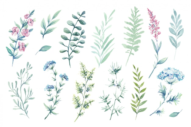 Ilustrações em aquarela. clipart botânico. conjunto de folhas verdes, ervas e galhos.