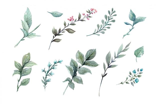 Ilustrações em aquarela de vetor