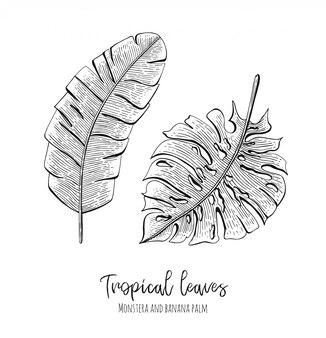 Ilustrações tropicais gravadas com folhas monstera e palmeira de banana.