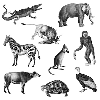 Ilustrações vintage de animais