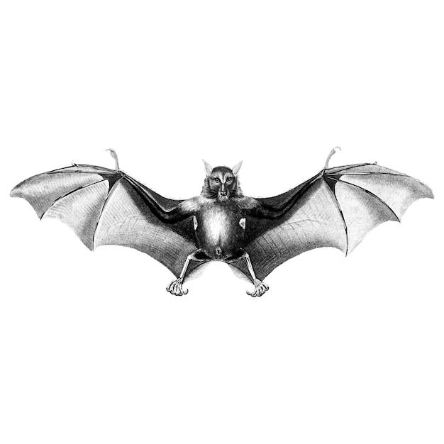 Ilustrações vintage de morcego
