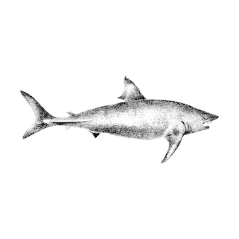 Ilustrações vintage de tubarão-frade