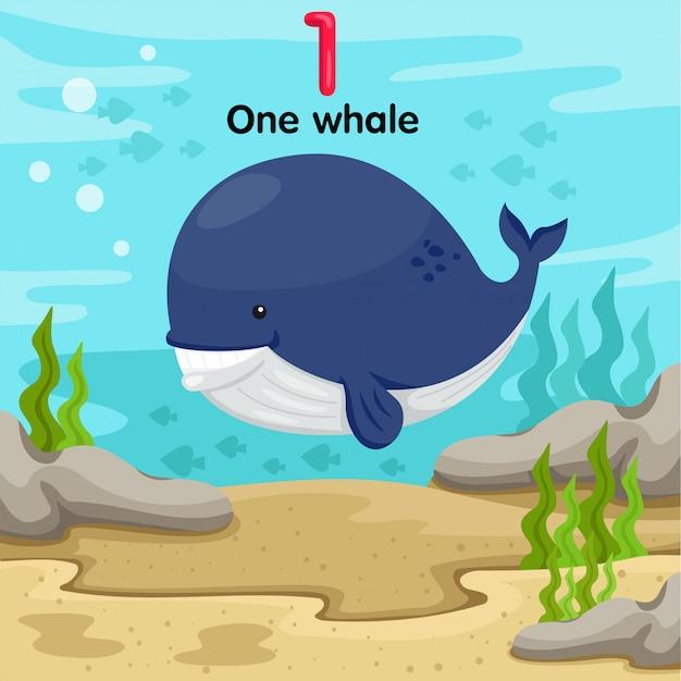 Ilustrador da baleia número um debaixo d'água