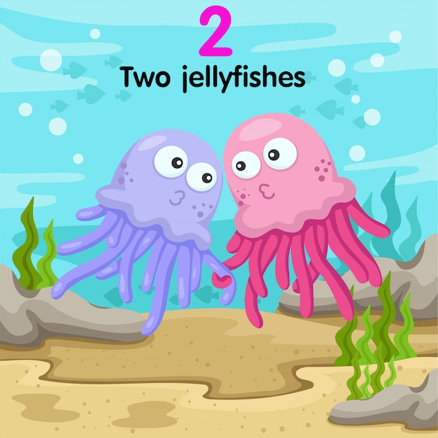 Ilustrador de águas-vivas número dois