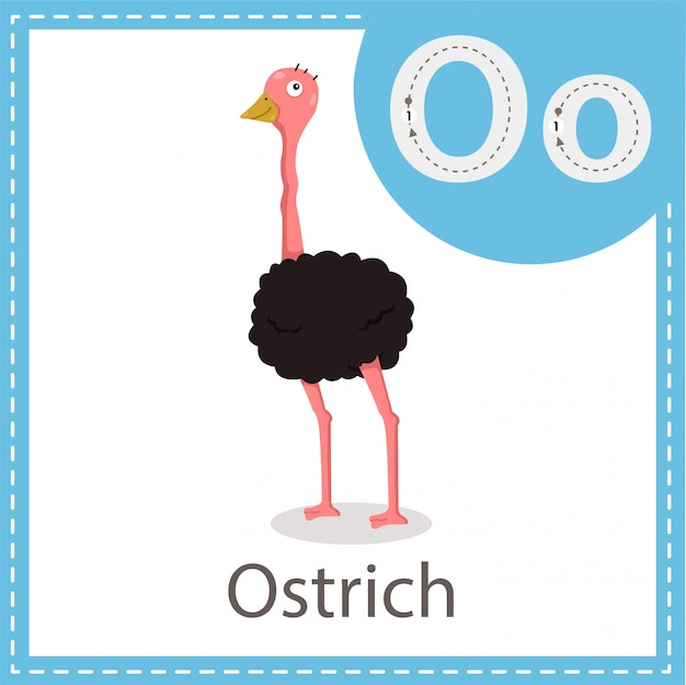 Ilustrador de ave avestruz