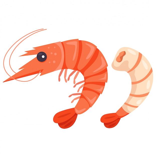 Ilustrador de camarão