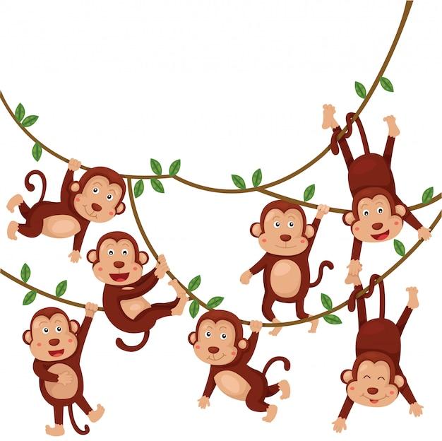 Ilustrador de desenhos animados engraçados de macacos