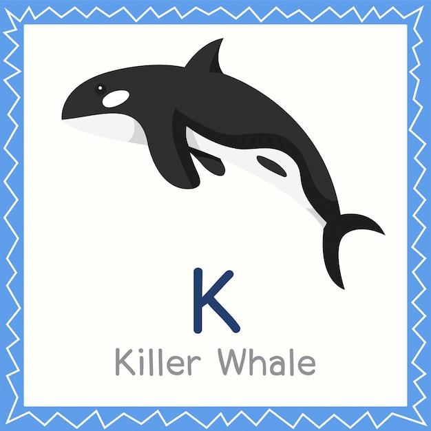 Ilustrador de k para o animal da baleia assassina