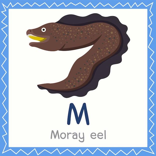 Ilustrador, de, m, para, moray, enguia, animal