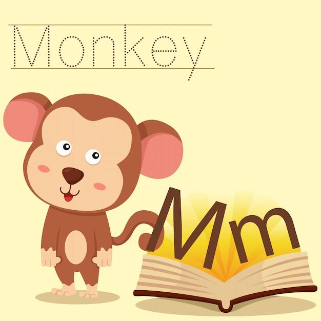 Ilustrador de m para vocabulário de macaco