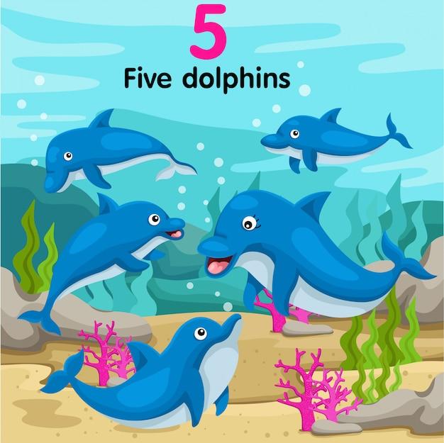 Ilustrador, de, numere cinco, golfinhos