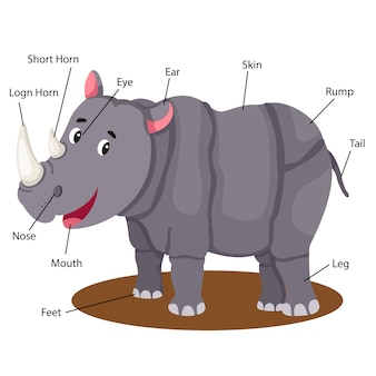 Ilustrador de parte do corpo de rinoceronte