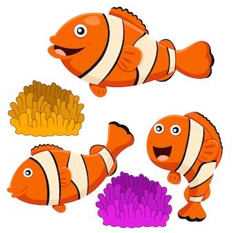 Ilustrador, de, peixe palhaço