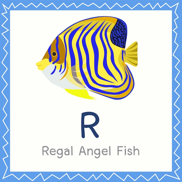 Ilustrador de r para o animal regal angel fish